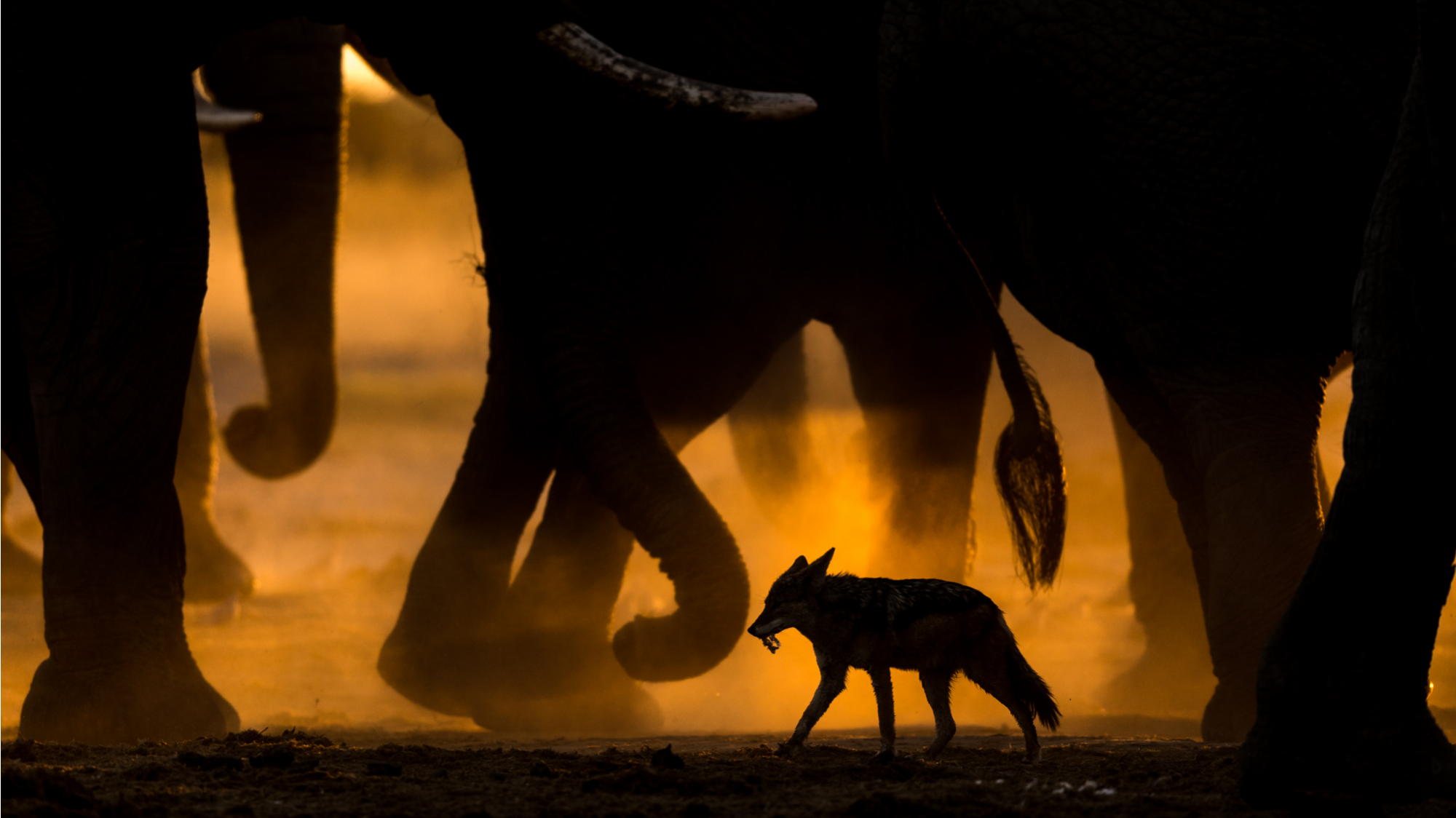 photographic tours & safaris GDT European wildlife photographer of the year