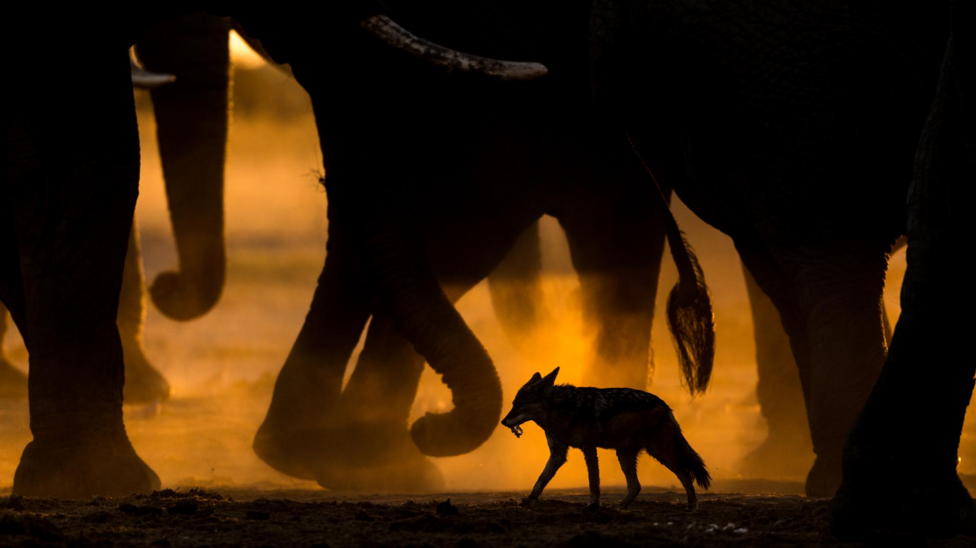 photographic tours & safaris GDT European wildlife photographer of the year