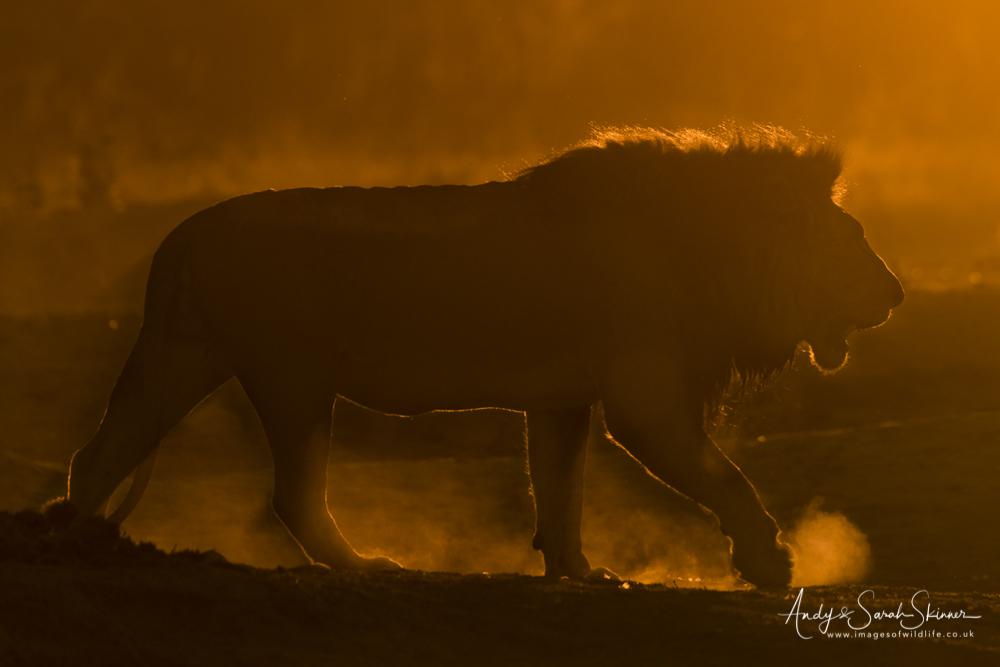 photo tour Botswana