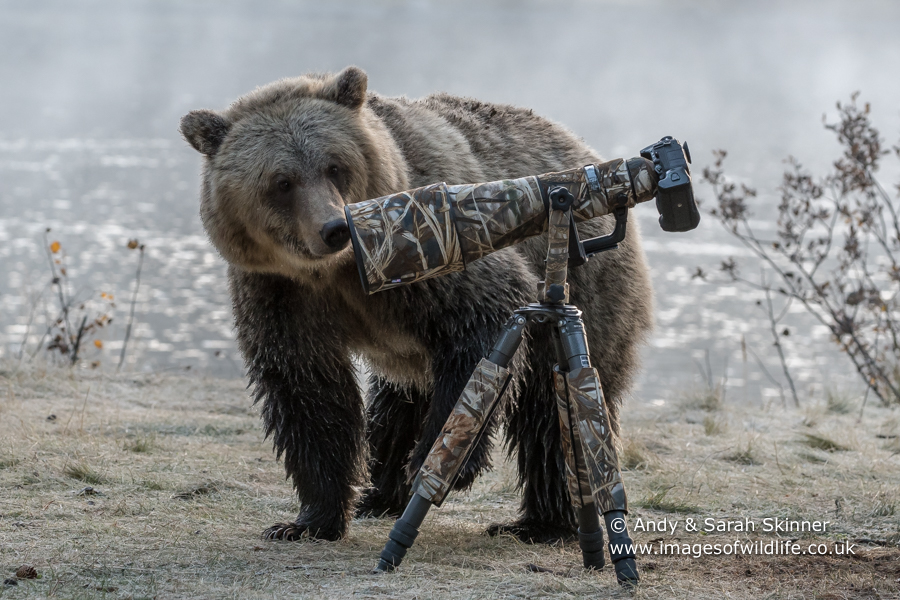 Never leave your camera gear unattended in bear country!