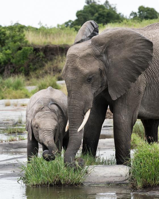 Elephant Maasai Mara safari