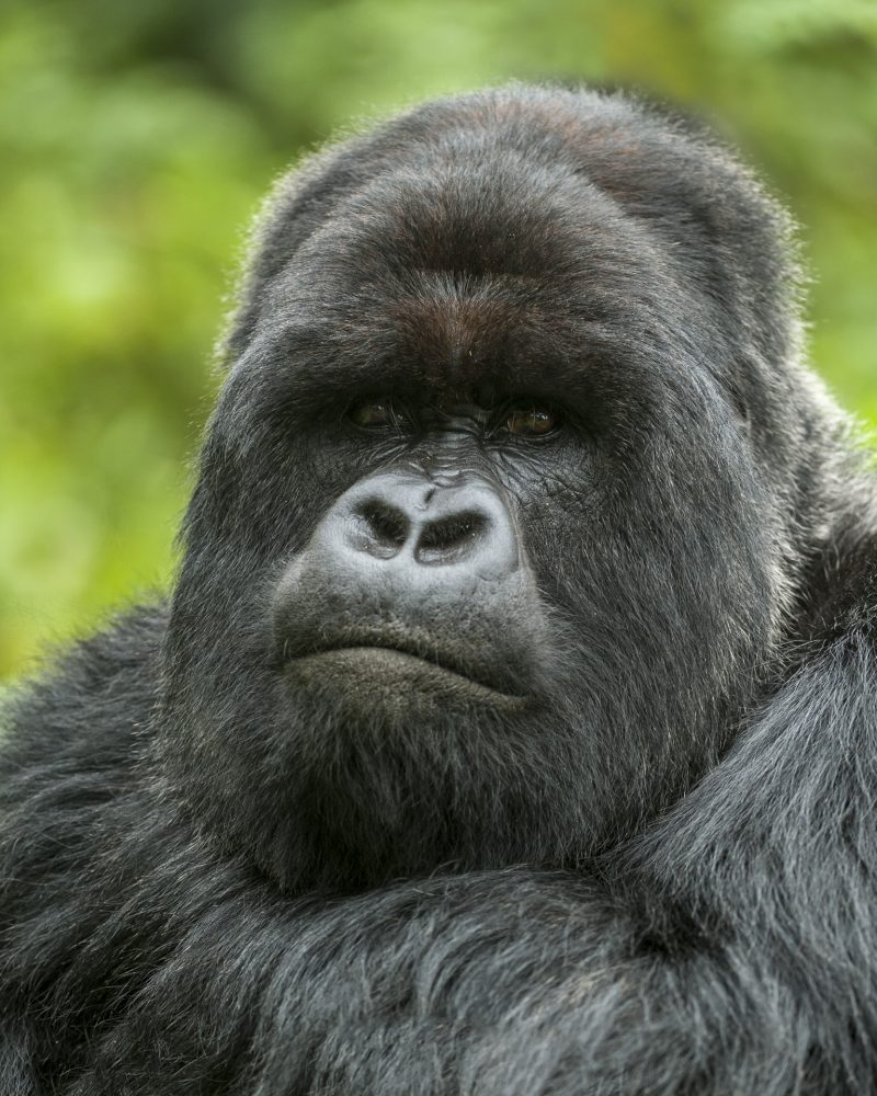 gorilla photo safaris