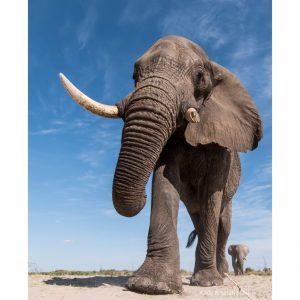 african-elephant-14