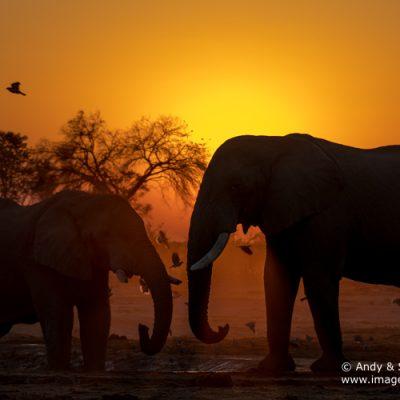 african-elephant-25