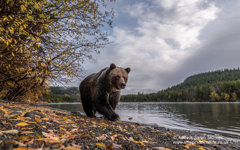 brown-bear-063