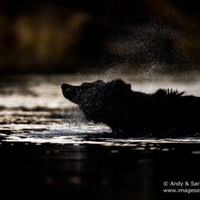 brown-bear-090