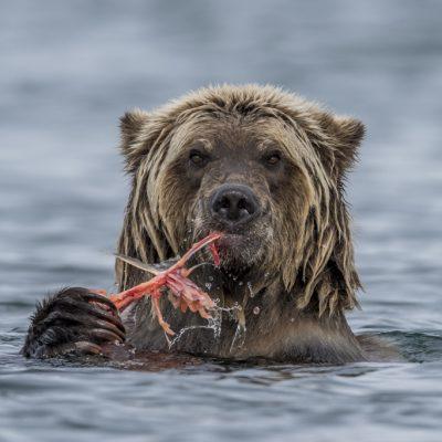 brown-bear-092