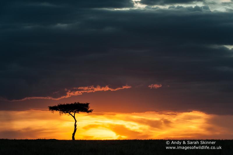 Maasai-Mara-Sunset-1