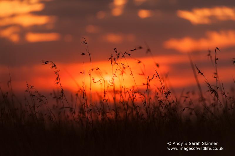 Maasai-Mara-Sunset-2