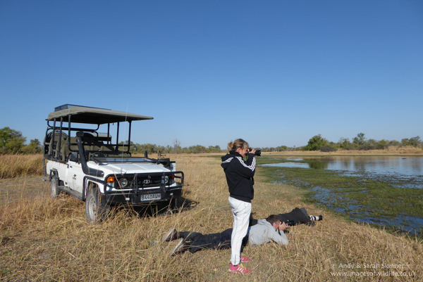 moremi game reserve photographic safari