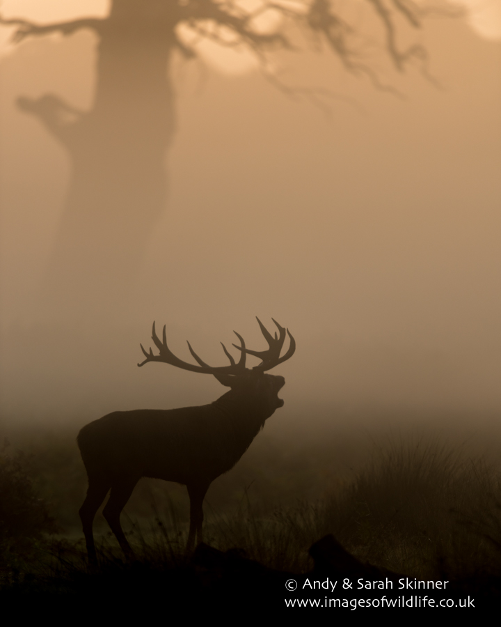 Red Deer 004