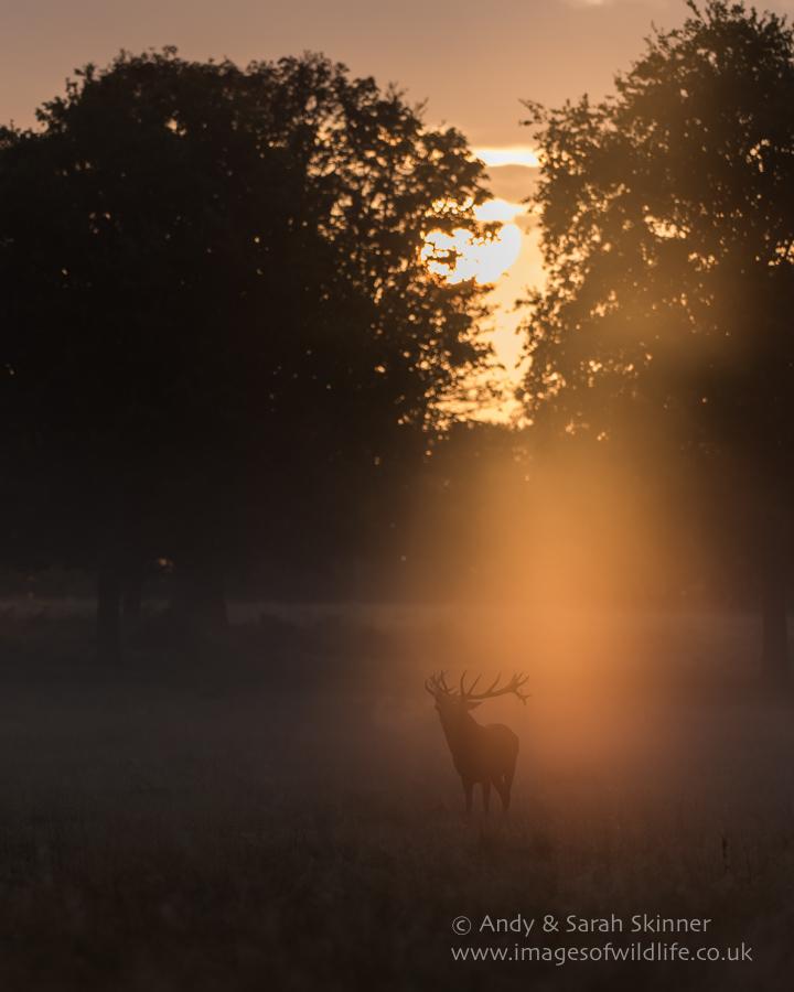 Red Deer 008