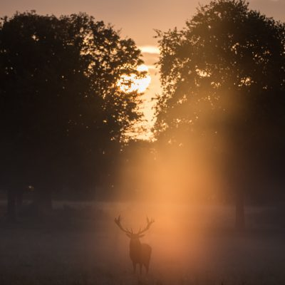 Red Deer 009