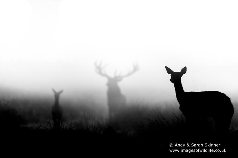 red-deer-10