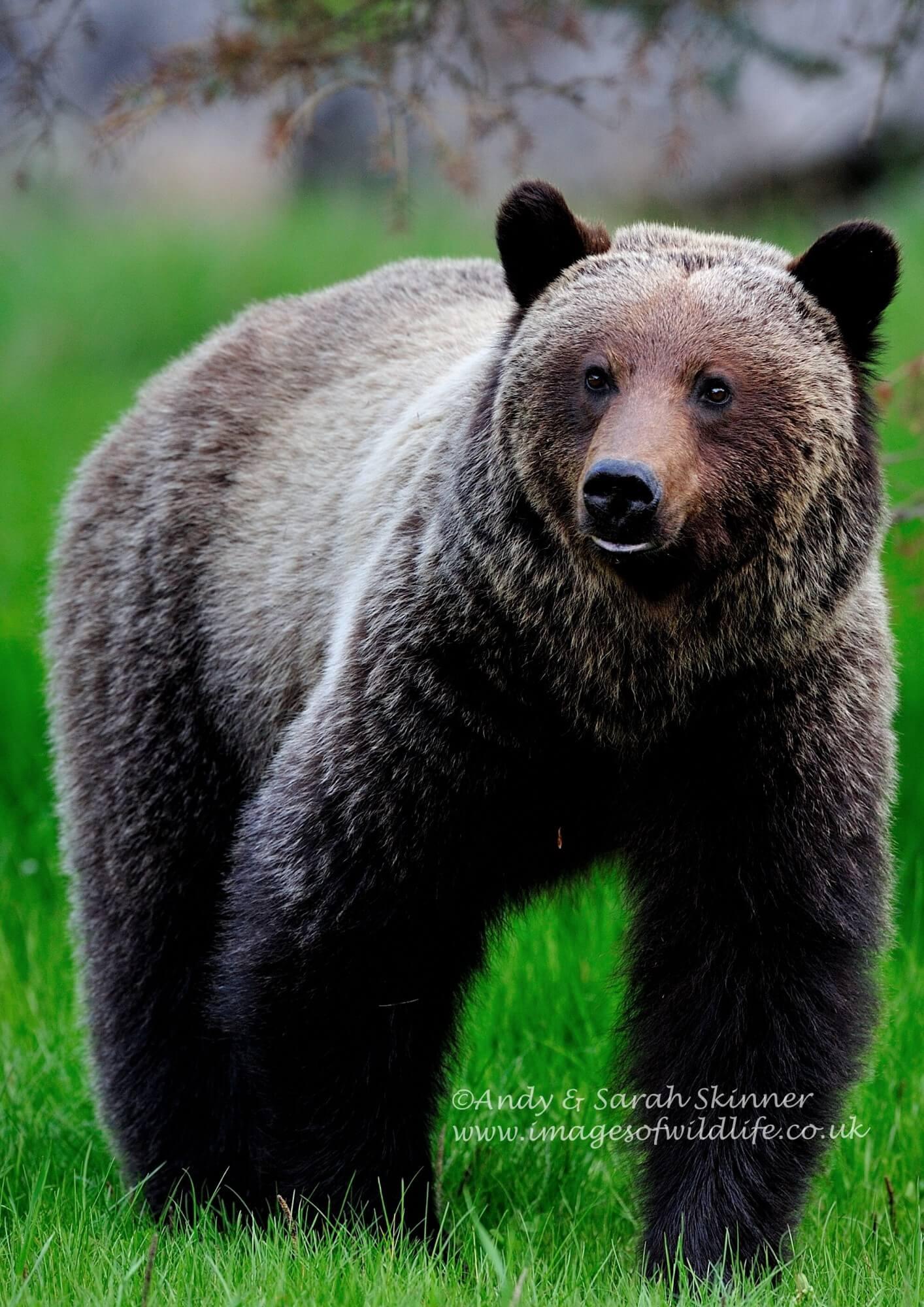 Bear fest!