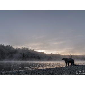 rown-bear-070